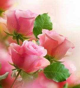 pink roses, again