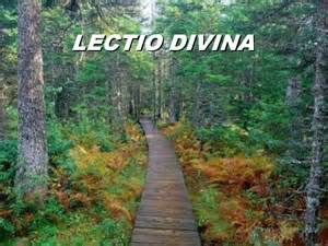 lectio divina path through woods