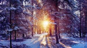 snowy woods with sun