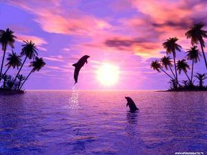 happy jumping dolphins