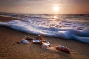 ocean shore and shells