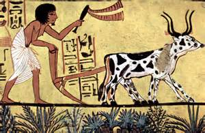 plowing - with an Egyptian farmer