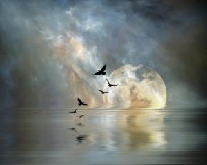 Moonrise over water - photo credit Bell of Compassion