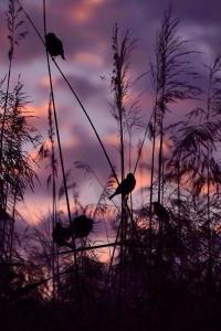 birds silhouette sunset