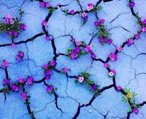 flowers in sidewalk cracks