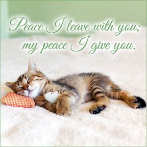 PEACE I leave with you kitten