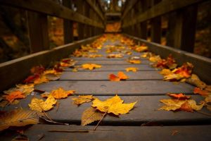 autumn leaves on a bridge