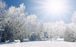 winter-landscape-forest with sun wallpaper-