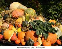 autumn-harvest-bounty