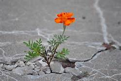 flower-growing-between-rocks