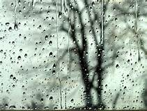 rain on window, tree